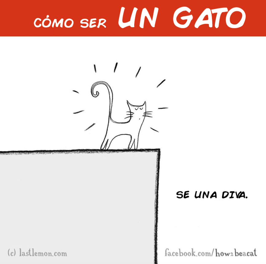 como ser un gato 8