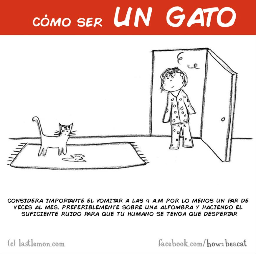 como ser un gato 9