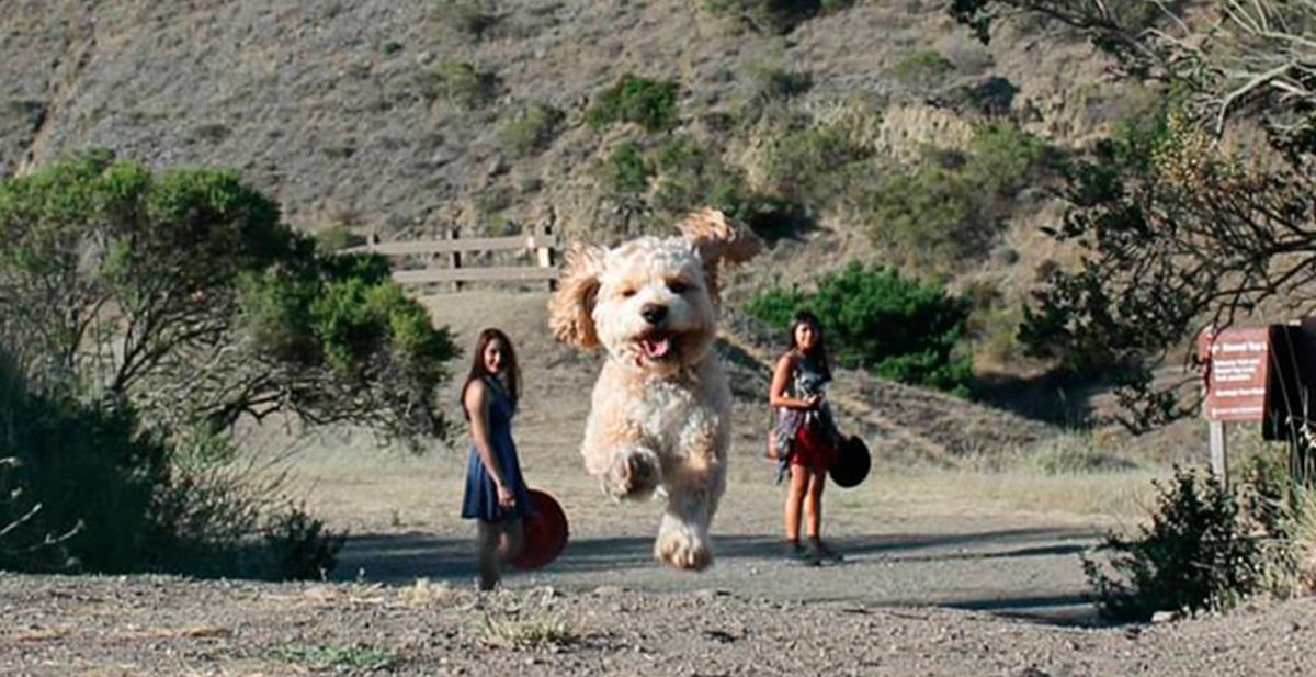 destacada perros gigantes