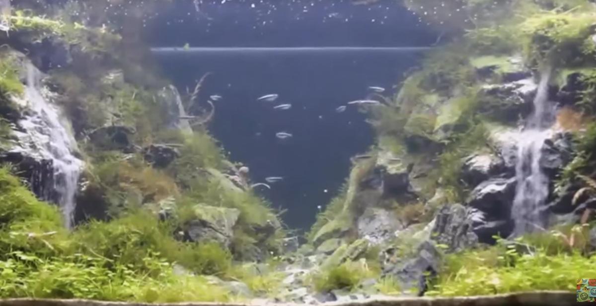 destacado acuario cascada