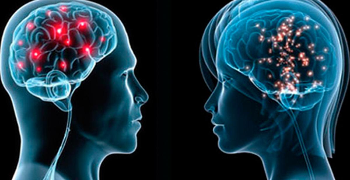 destacados cerebro
