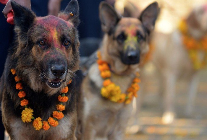 festival_perros_7
