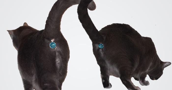 gema culo gato