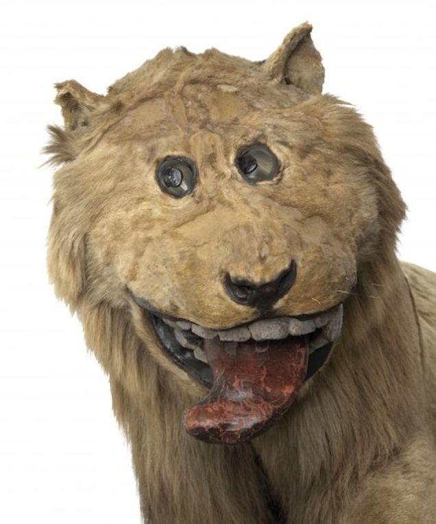 leon sonriente 1