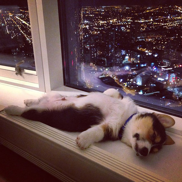 perretes durmiendo 13