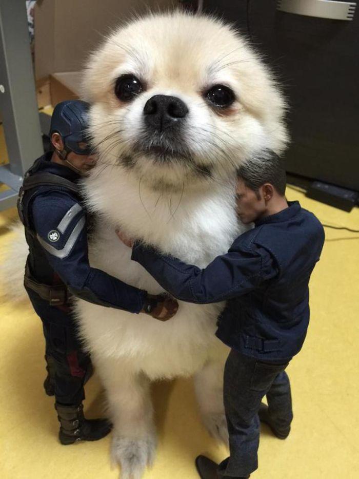 perros que parecen gigantes 12