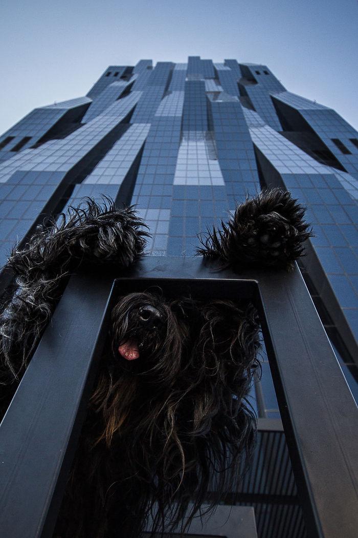 perros que parecen gigantes 5