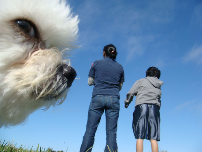 perros que parecen gigantes 8