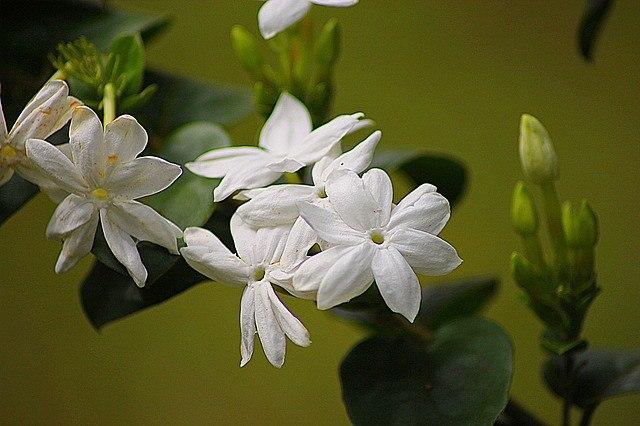 plantas_medicinales_10