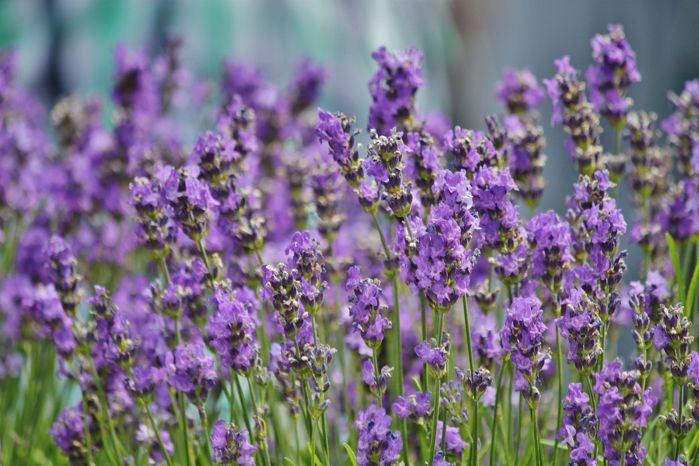 plantas_medicinales_11