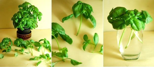 plantas_medicinales_2