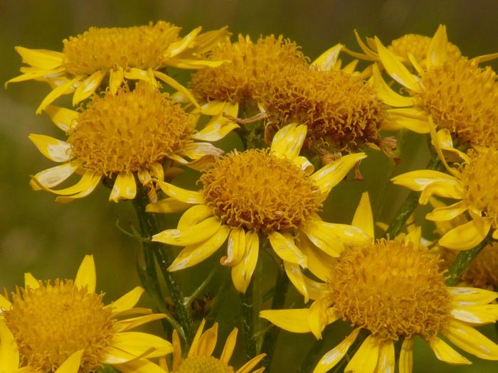 plantas_medicinales_6