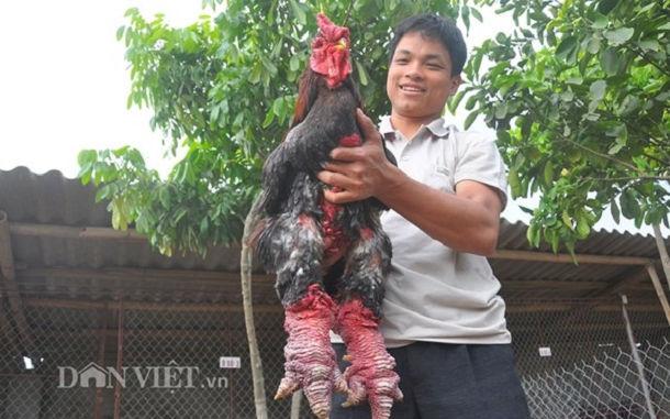 pollo dong tao dragon5
