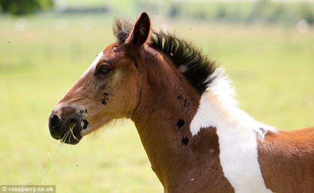 potro con mancha de caballo 2