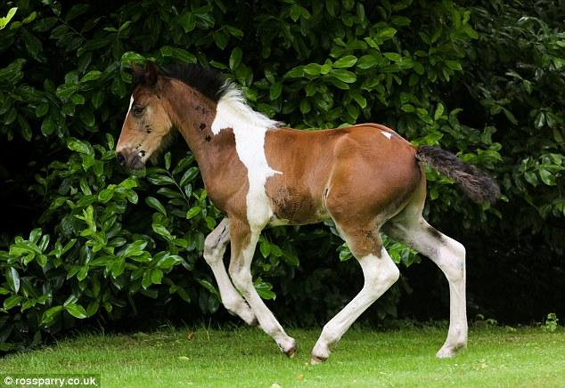 potro con mancha de caballo 4