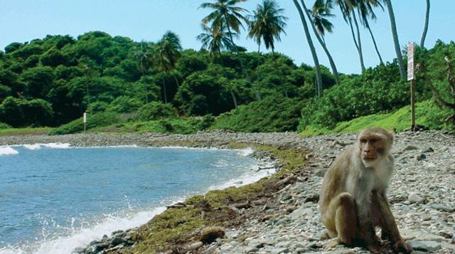La Isla de los Monos en Puerto Rico (11)