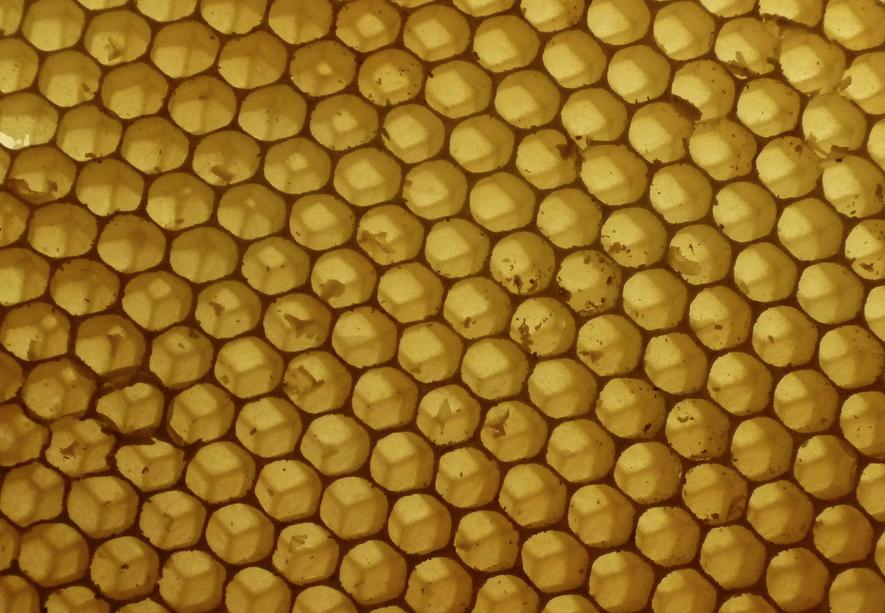 abejas hexagonales