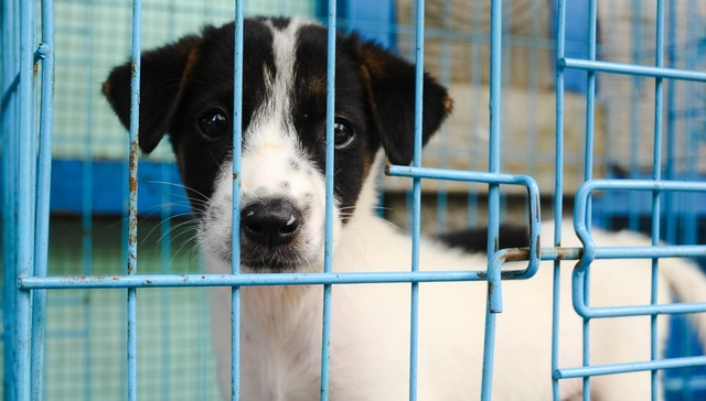 adoptar un perro 4