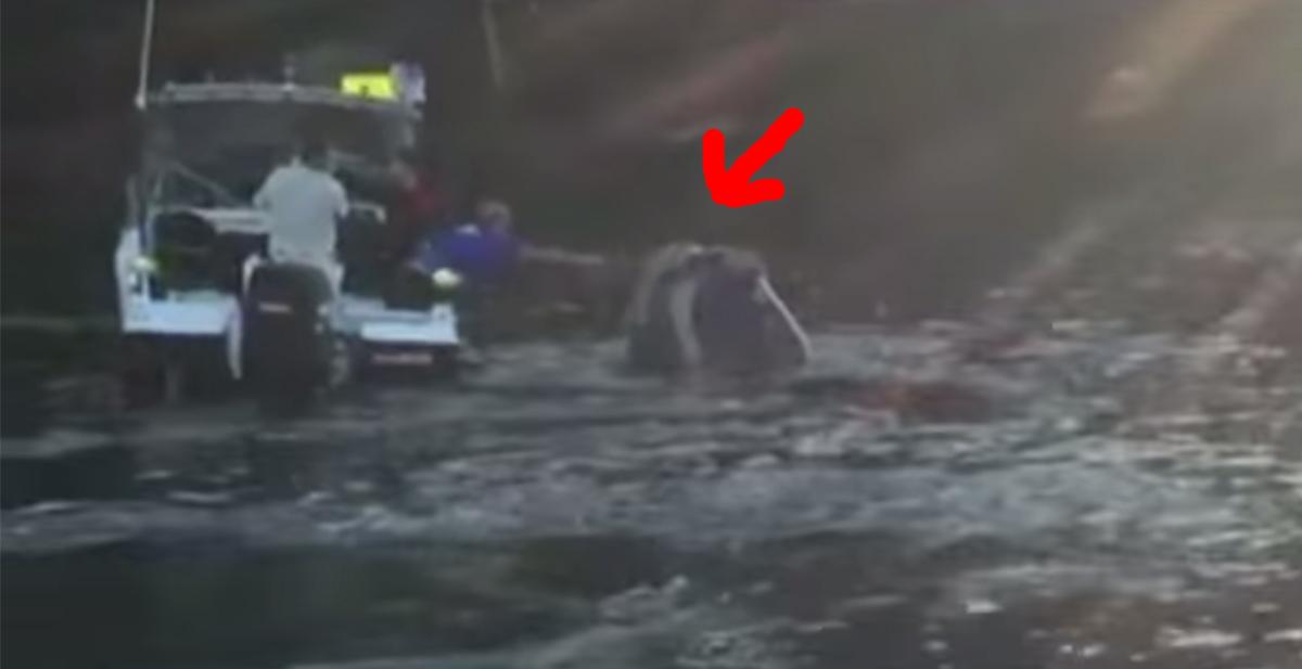 ballena ayudada por pescadores bolsa de plastico