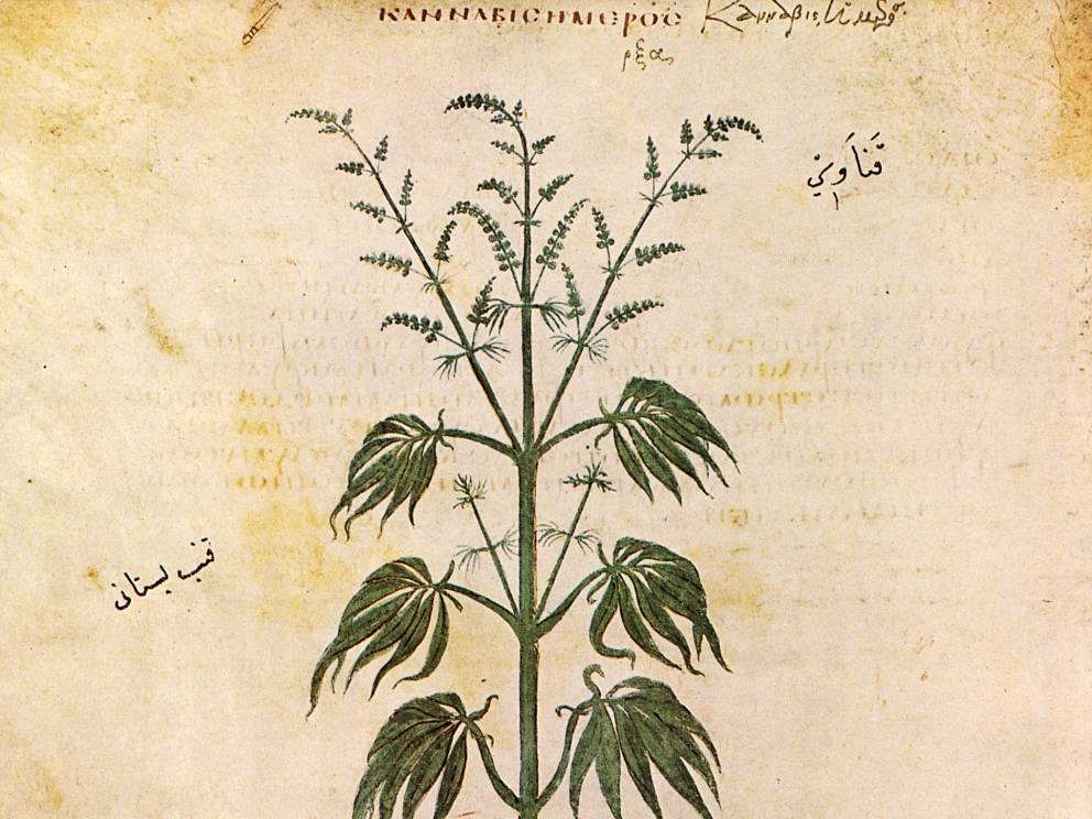 cannabis_antiguedad_8