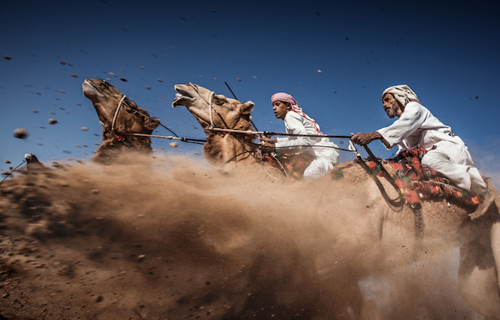 Camel Ardah