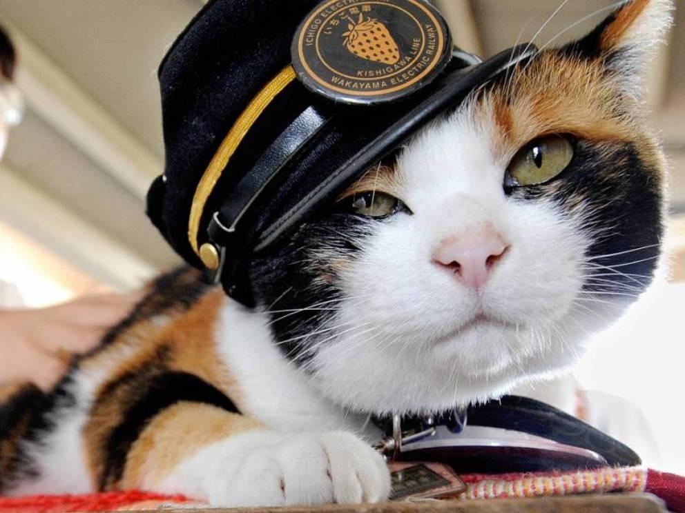 gatos heroicos de la historia 1