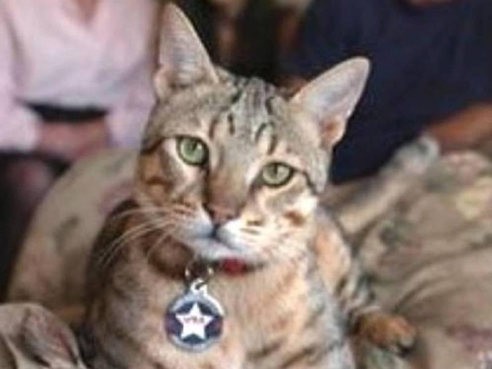 gatos heroicos de la historia 9