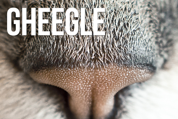 gheegle