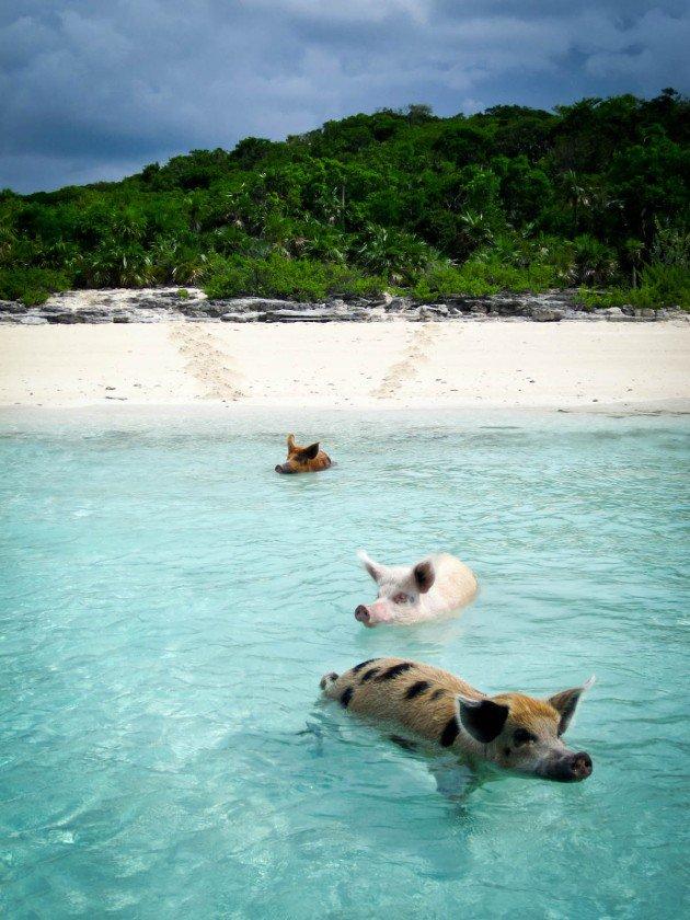isla-de-los-cerdos-1