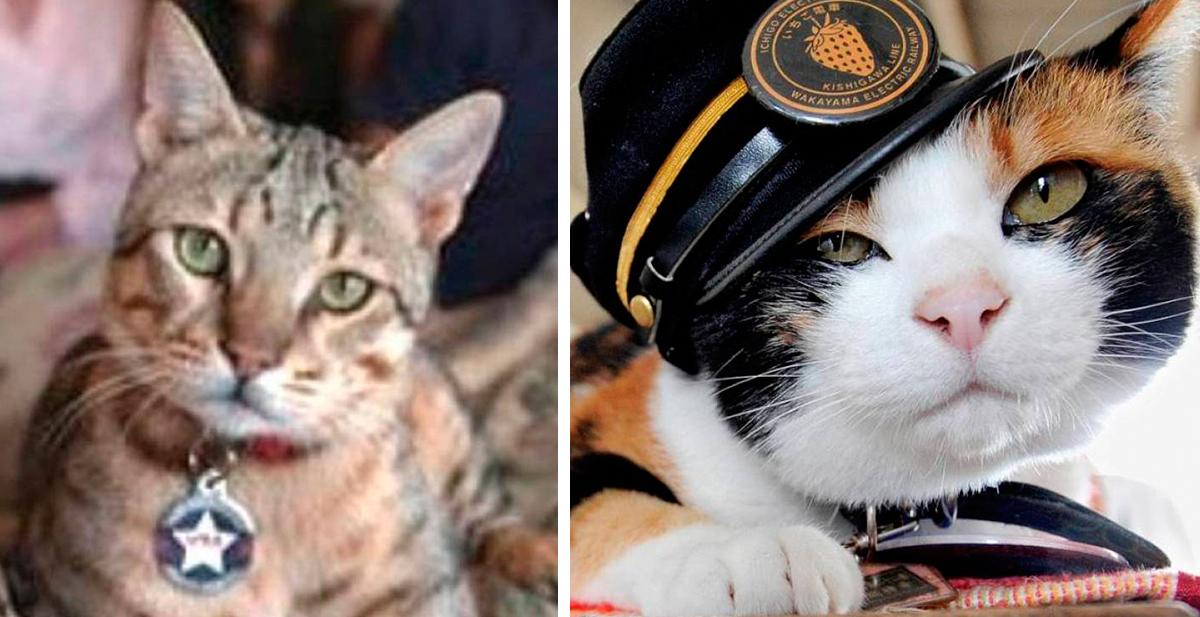 los gatos heroicos de la historia