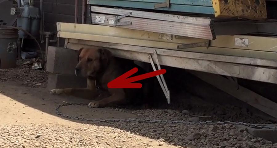perro-encadenado