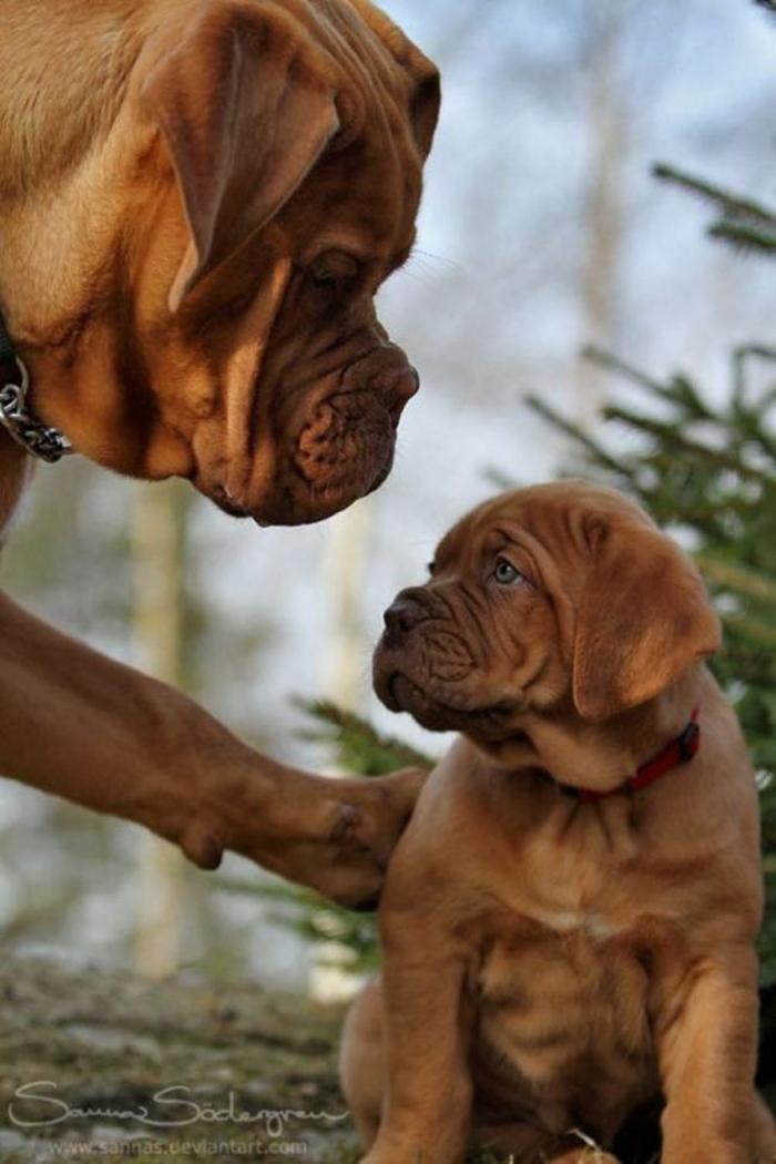 perros en familia17