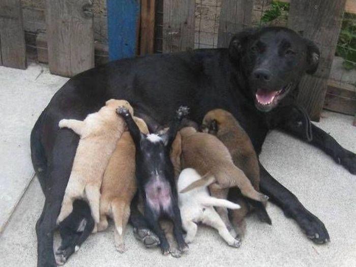 perros en familia19