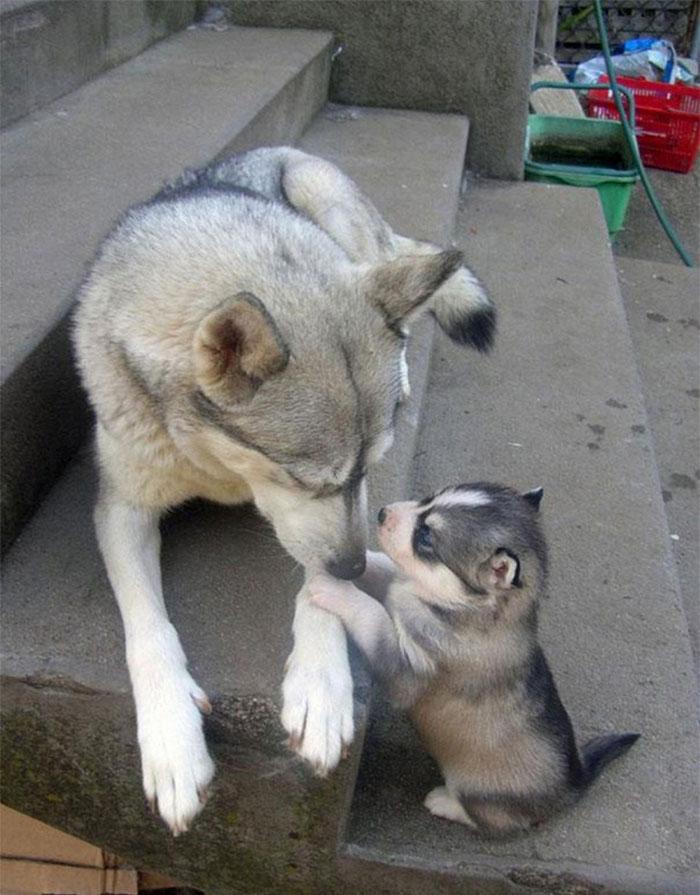 perros en familia20