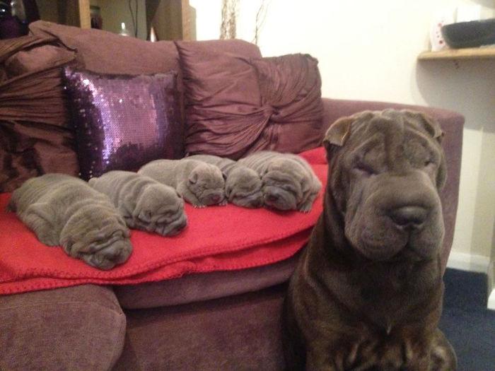 perros en familia3