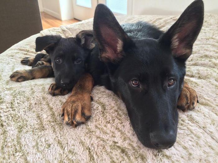 perros en familia5
