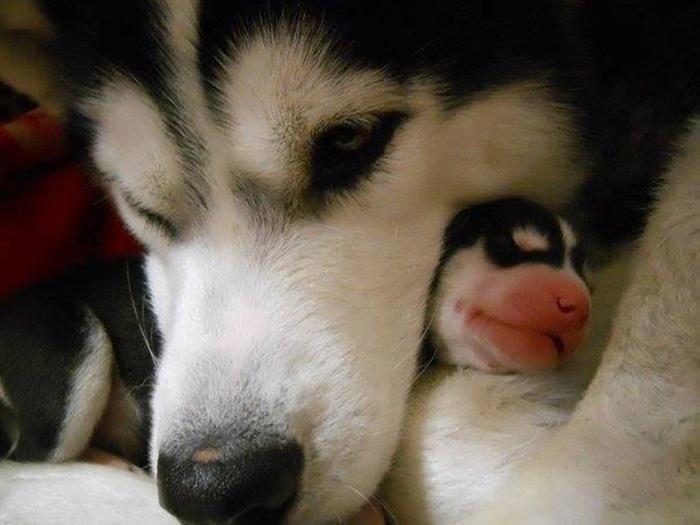 perros en familia8