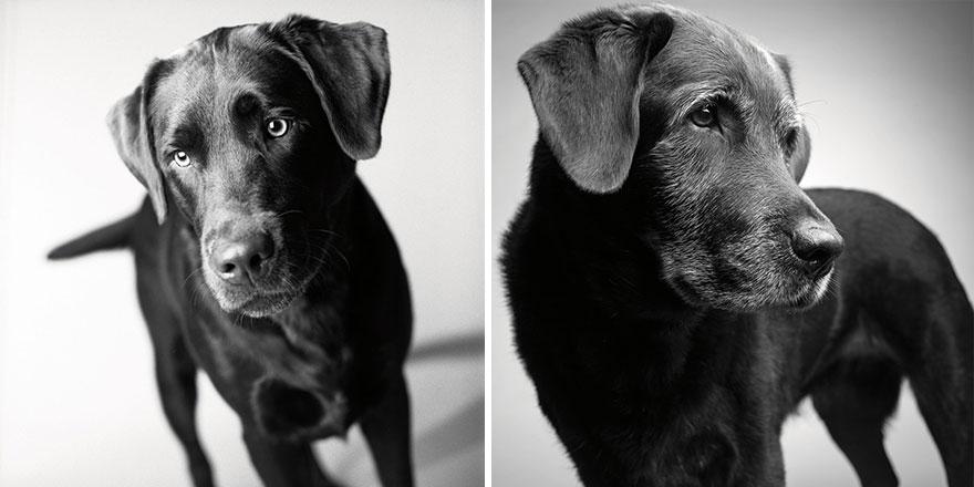 perros_edad_14