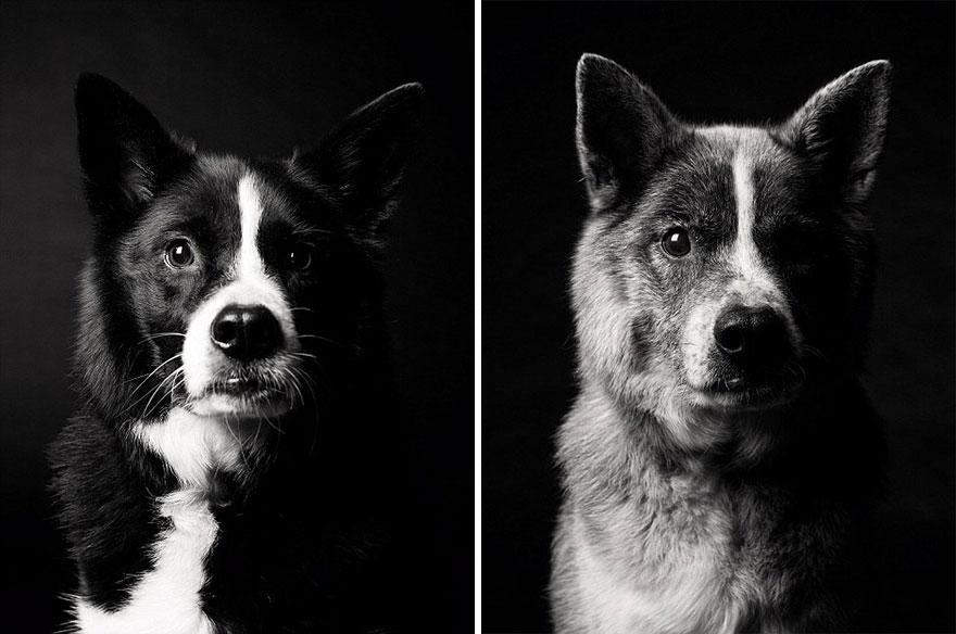 perros_edad_2