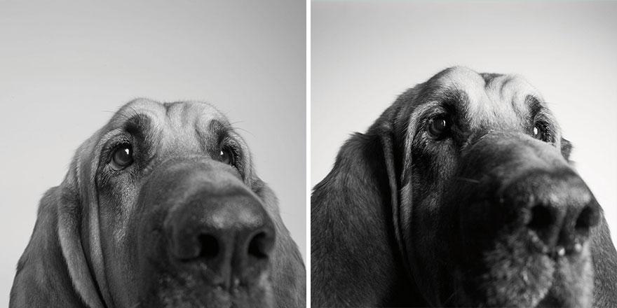 perros_edad_4