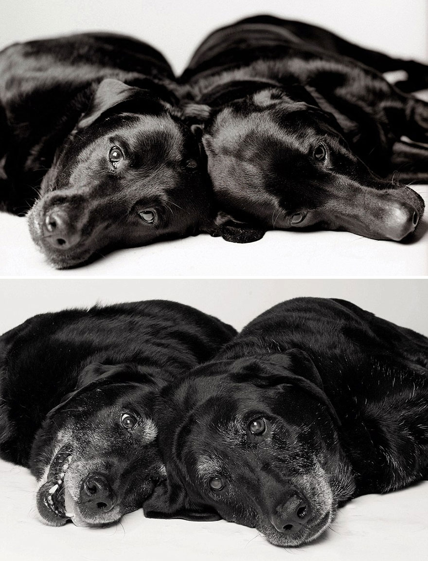 perros_edad_5
