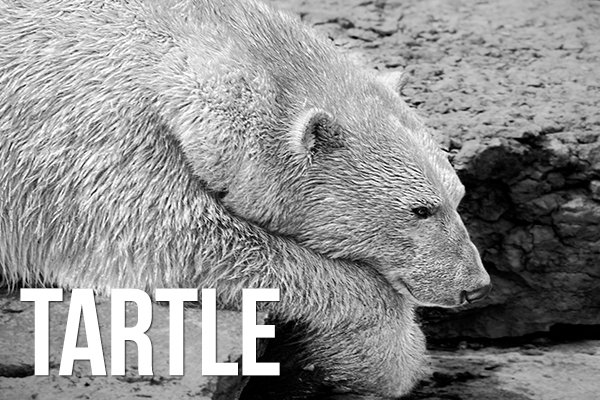 tartle