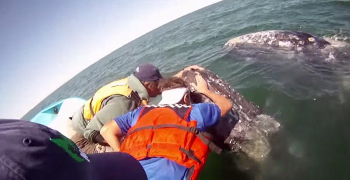 turistas se hacen amigos de ballena gris