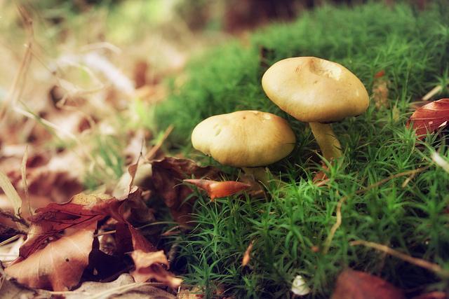 Flickr: Juanedc.com