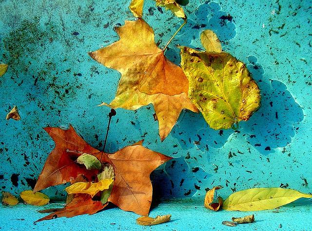 Flickr: Laura