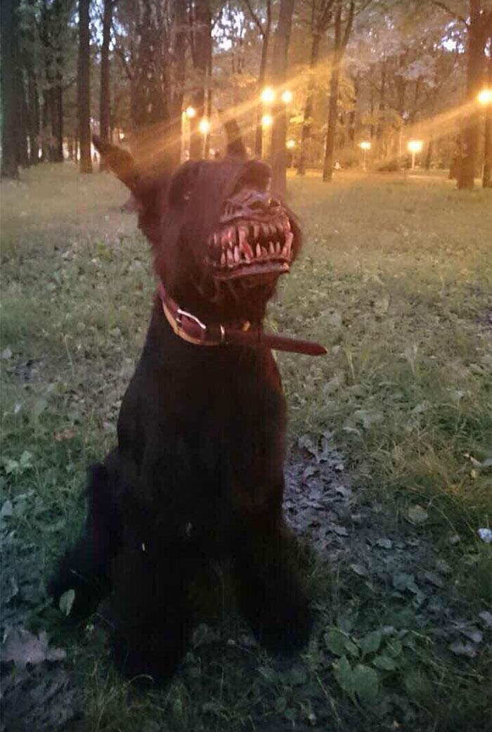 bozal perro miedo 1