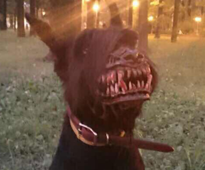 bozal perro miedo 4