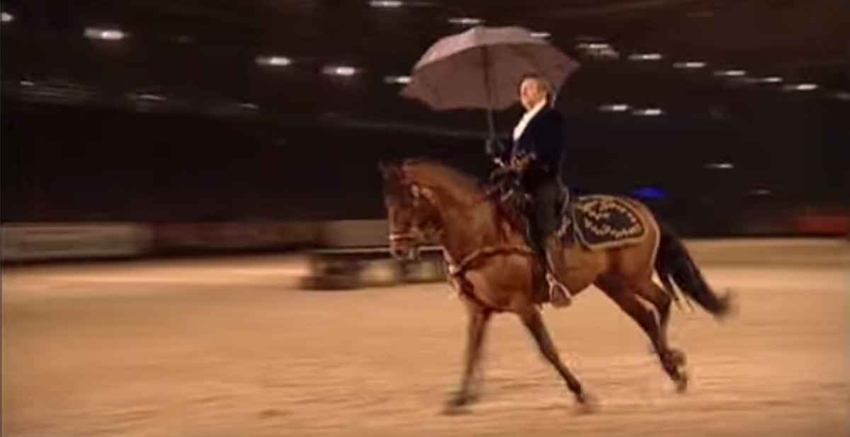 caballo bailando coreografia cantando bajo la lluvia como gene kelly