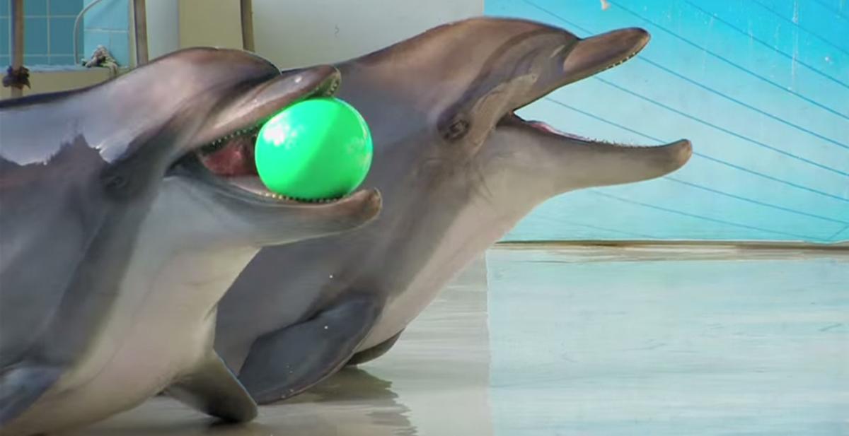 delfines en cautividad