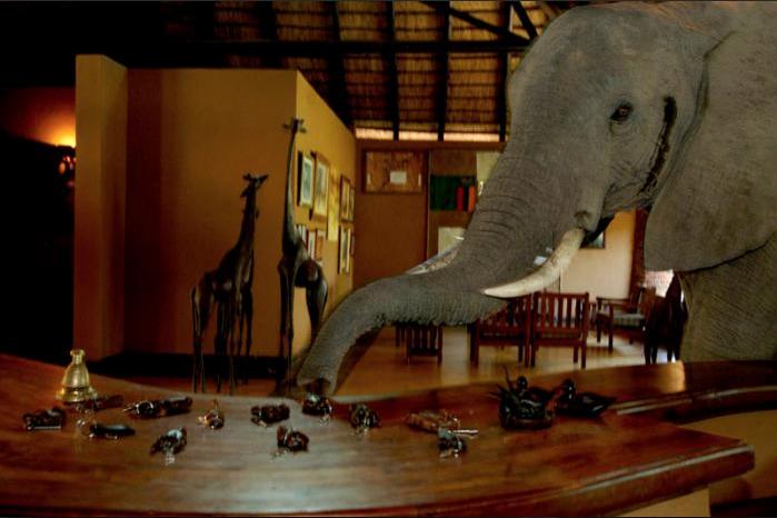 elefantes en la recepcion 1